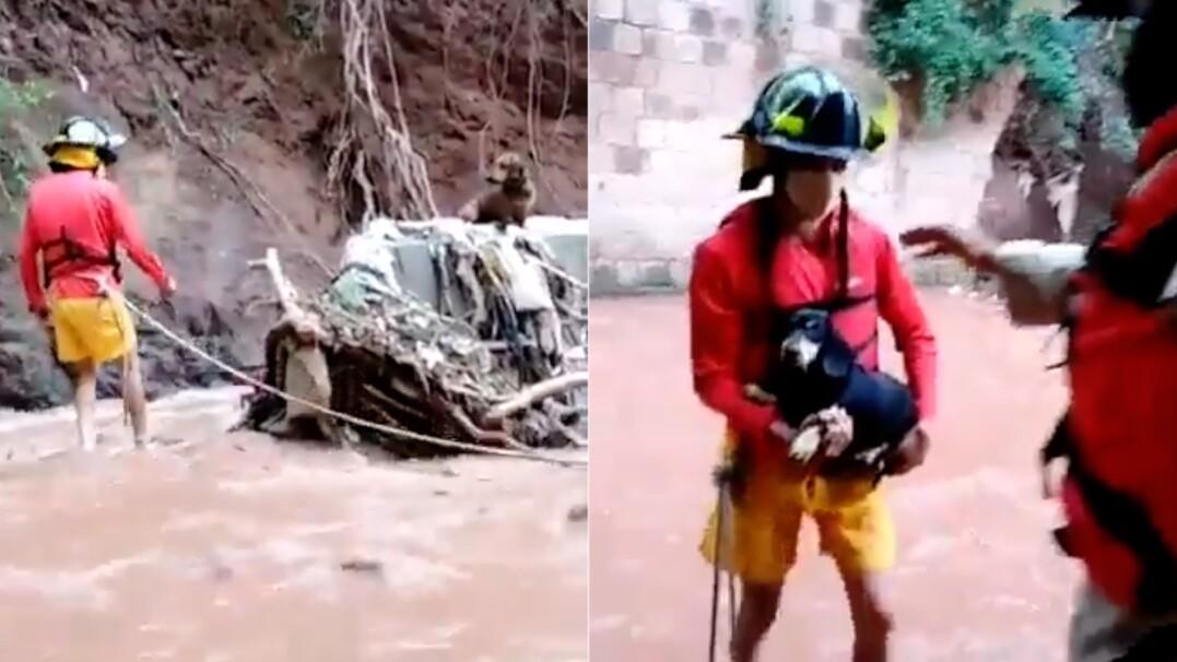 Jamniki uratowane z rwącej rzeki. Bez pomocy strażaków nie miałyby szans na przeżycie