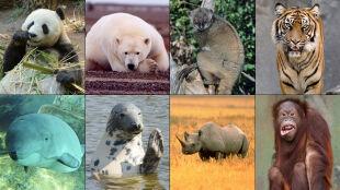 25 procent ssaków zagrożonych wyginięciem. Czy czeka nas zagłada?