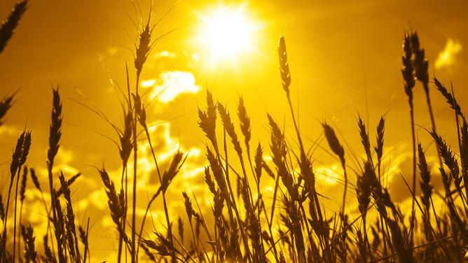 Klimatolodzy: lato w Polsce było miejscami rekordowo gorące